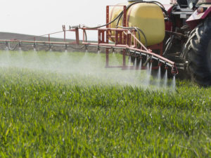 Tractor spraying wheat field with sprayer, herbicides and pesticides